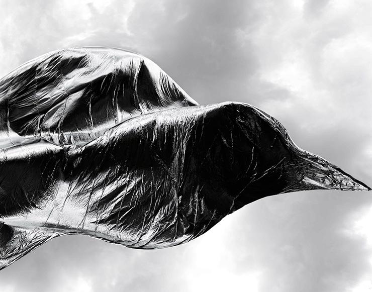 Flug des Phönix